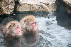 La neve monkeys godere di un onsen nella prefettura di Nagano, Giappone Fotografia Stock