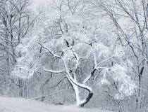 La neve nella foresta. Fotografia Stock