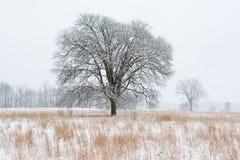 La neve si è affollata il prato Immagine Stock