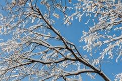 La neve si ramifica fondo astratto del cielo fotografia stock libera da diritti