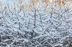 La neve si ramifica fondo astratto del cielo immagine stock libera da diritti