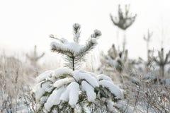 La neve sui rami di un albero Immagini Stock Libere da Diritti