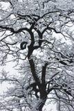 La neve sull'albero nero. Fotografie Stock Libere da Diritti