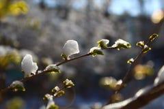 La neve sulle foglie Immagini Stock Libere da Diritti