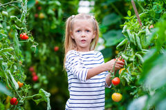 La niña adorable cosecha los pepinos y los tomates en invernadero Imágenes de archivo libres de regalías
