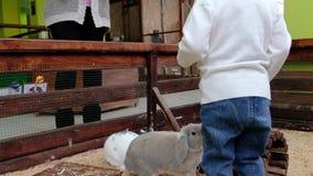 La niña alimenta conejos en un parque zoológico del contacto Niño lindo con el conejito almacen de metraje de vídeo