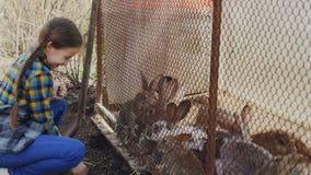 La niña emocionada en delantal está alimentando conejos enjaulados con la hierba en granja, mirándolos coma y risa Feliz metrajes