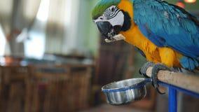 La niña en el zoo-granja que alimenta el loro colorido del Macaw almacen de metraje de vídeo