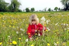 La niña entresaca los dientes de león Fotografía de archivo libre de regalías