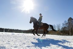 la niña está montando un caballo Una mujer monta un caballo Entrenamiento hippodrome S Foto de archivo libre de regalías