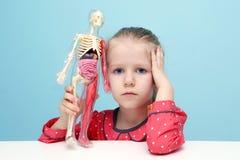 La niña explora la estructura del cuerpo humano Imágenes de archivo libres de regalías
