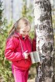 La niña recoge la savia del abedul en bosque Imagenes de archivo