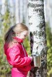 La niña recoge la savia del abedul en el bosque Foto de archivo
