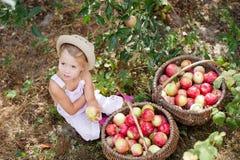 la niña recoge las manzanas en el jardín Fotografía de archivo libre de regalías