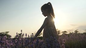 La niña soñadora que camina en campo florece en la puesta del sol Actividades al aire libre metrajes