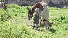 La niña y su más viejo hermano están alimentando un burro en una granja en las montañas almacen de video