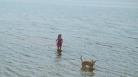 La ni?a camina en la playa por el r?o con un perro metrajes