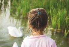 La niña mira en un cisne que se coloca el agua Fotos de archivo libres de regalías