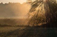 La niebla baja con el sol irradia el levantamiento entre los árboles fotos de archivo