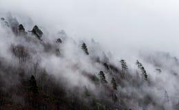 La niebla cubrió árboles foto de archivo libre de regalías