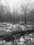 La niebla de Bailey Imagen de archivo