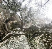 La niebla de Bailey Fotografía de archivo