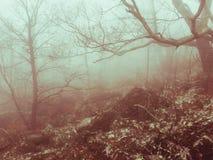 La niebla de Bailey Foto de archivo