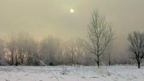 La niebla mística en el invierno en el campo almacen de metraje de vídeo