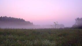 La niebla rosada del color se separó lentamente a lo largo de la tierra almacen de metraje de vídeo