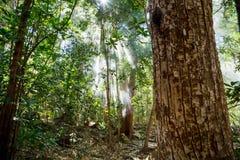 La niebla y el sol irradia en la selva densa verde Fotos de archivo libres de regalías