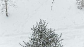 La nieve blanca cae en el árbol de navidad almacen de video