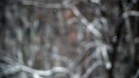La nieve a cámara lenta cae las ramas HD del fondo almacen de video