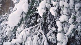 La nieve cae de una rama almacen de metraje de vídeo