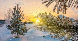 La nieve cae en las ramas del pino de la escarcha, animación de la Navidad del invierno almacen de metraje de vídeo