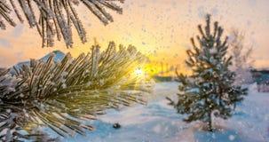 La nieve cae en las ramas del pino de la escarcha, animación de la Navidad del invierno stock de ilustración