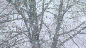 La nieve cae en un bosque metrajes