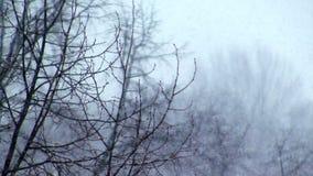 La nieve cae en un bosque almacen de metraje de vídeo