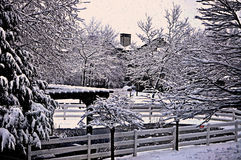 La nieve cristalina en ramas de árbol en la noche marca buenas fiestas Fotografía de archivo libre de regalías