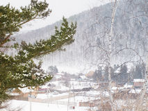 La nieve de Firry ramifica en el fondo ruso del pueblo del invierno Foto de archivo