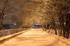 La nieve de la noche del invierno cae en el parque Foto de archivo libre de regalías