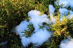 La nieve del arbusto de las coníferas derrite el sol el calor de la mañana del verdor del paisaje de la ciudad del otoño Imagen de archivo libre de regalías