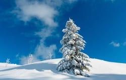 La nieve del invierno se encogió de miedo árbol de abeto en montaña Imagen de archivo