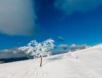 La nieve del invierno se encogió de miedo árbol en montaña Fotos de archivo