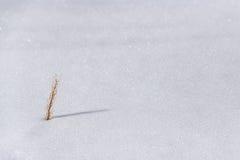 La nieve es hierba seca. Fotografía de archivo libre de regalías