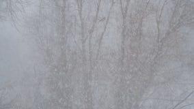 La nieve está cayendo lentamente contra el árbol almacen de video