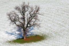 La nieve está derritiendo Imagen de archivo