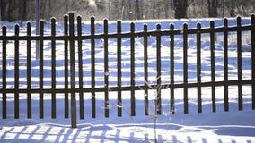 La nieve forma escamas cayendo en luz del sol brillante en la cerca nevada del invierno en campo Efecto de Defocus almacen de metraje de vídeo