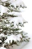 La nieve limitó el árbol de Navidad Foto de archivo libre de regalías