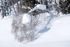 La nieve miente en ramas del abedul Fotos de archivo