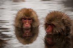 La nieve monkeys disfrutar de un onsen en la prefectura de Nagano, Japón Imagen de archivo libre de regalías